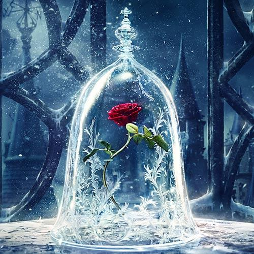 Beauty and The Beast Red Rose Diamond DIY Painting